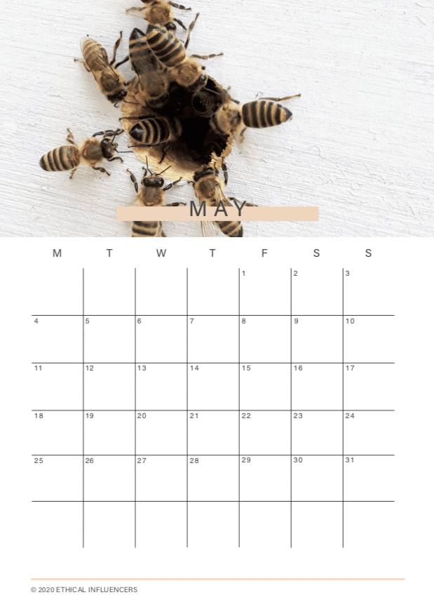 DIY Content Calendar for May | Ethical Influencers