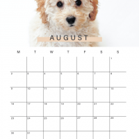 Ethical Influencers - Content Calendar 2021 - August